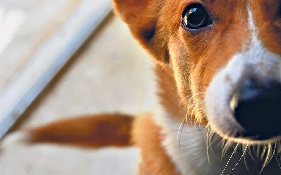 Animais: Em defesa dos que têm garras e dentes