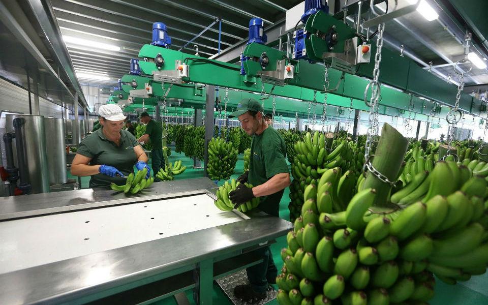 Centro de investigação da banana avança  e vai custar 1,5 milhões