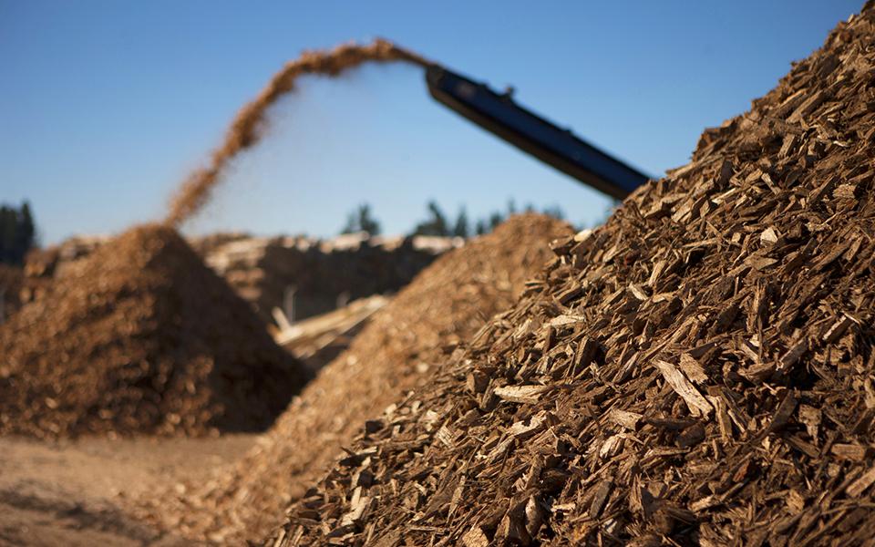 """""""Incêndios reduziram significativamente a biomassa disponível"""""""