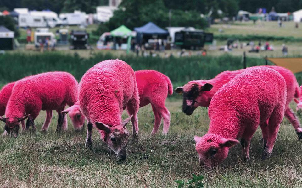 A escolha entre esfolar a ovelha ou tosquiá-la com suavidade