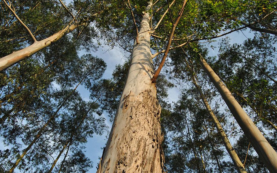 Ambiente contrata lei orgânica por ajuste direto a economista