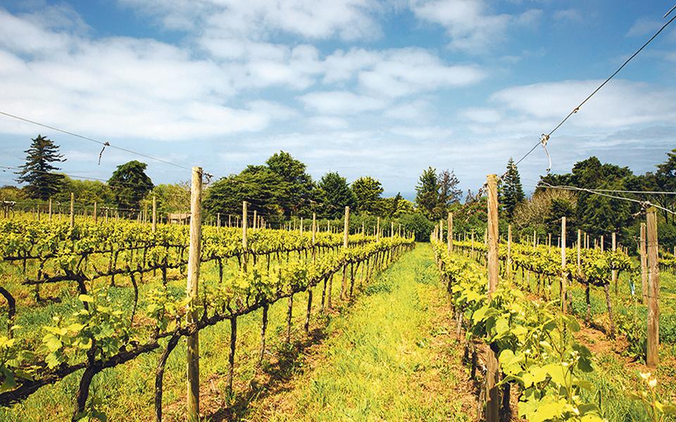 China está a descobrir  os vinhos do Alentejo