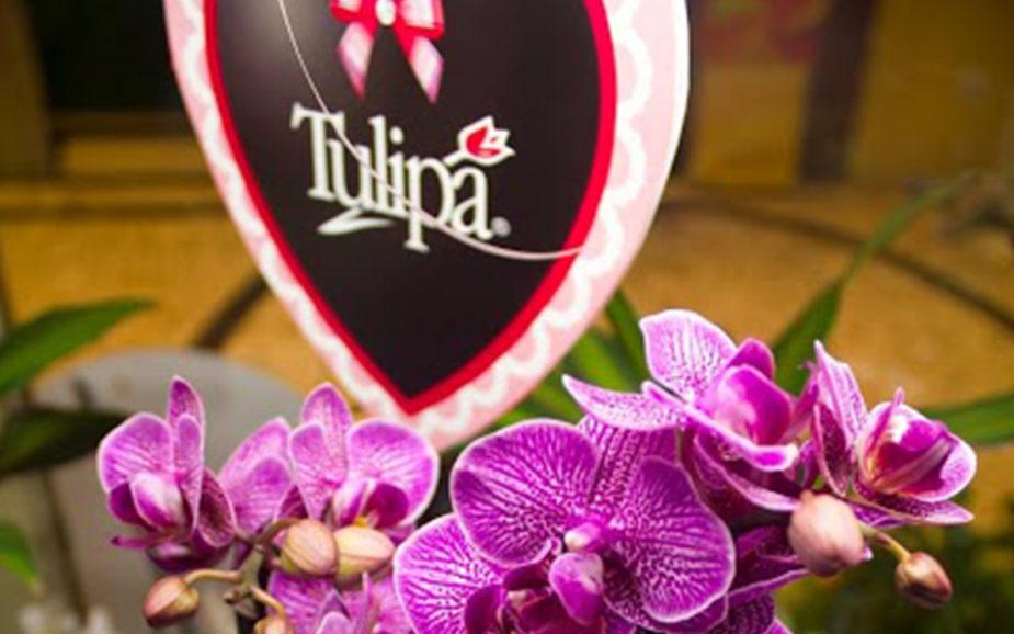 Tulipa: a empresa que resiste a incêndios e intempéries