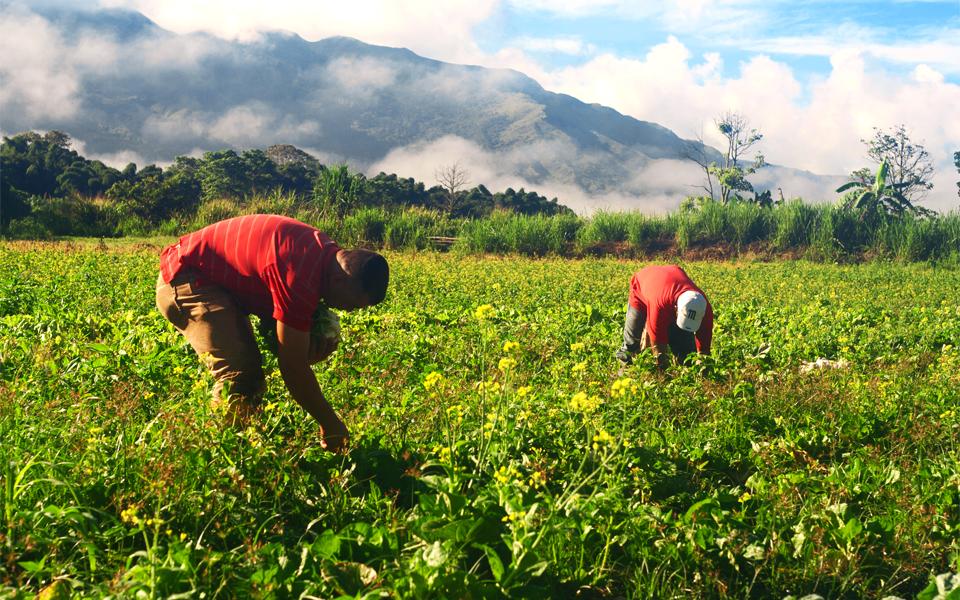 """""""Os agricultores estão  a assumir significativa importância económica"""" diz ministro"""