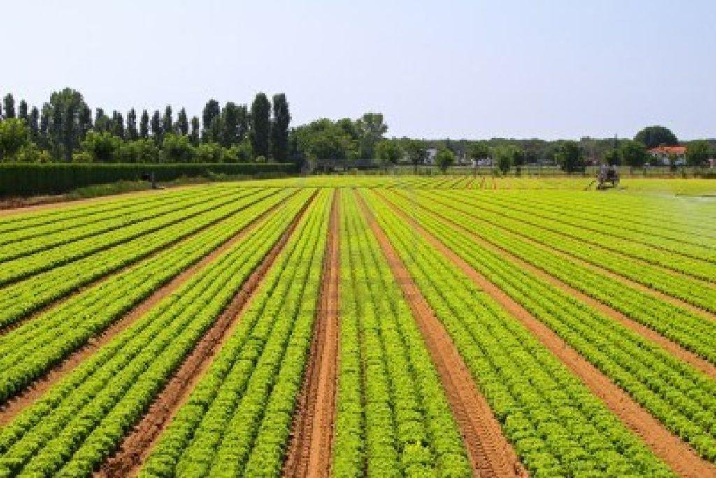 Agricultura: Alterações climáticas afetam produção de 'commodities'