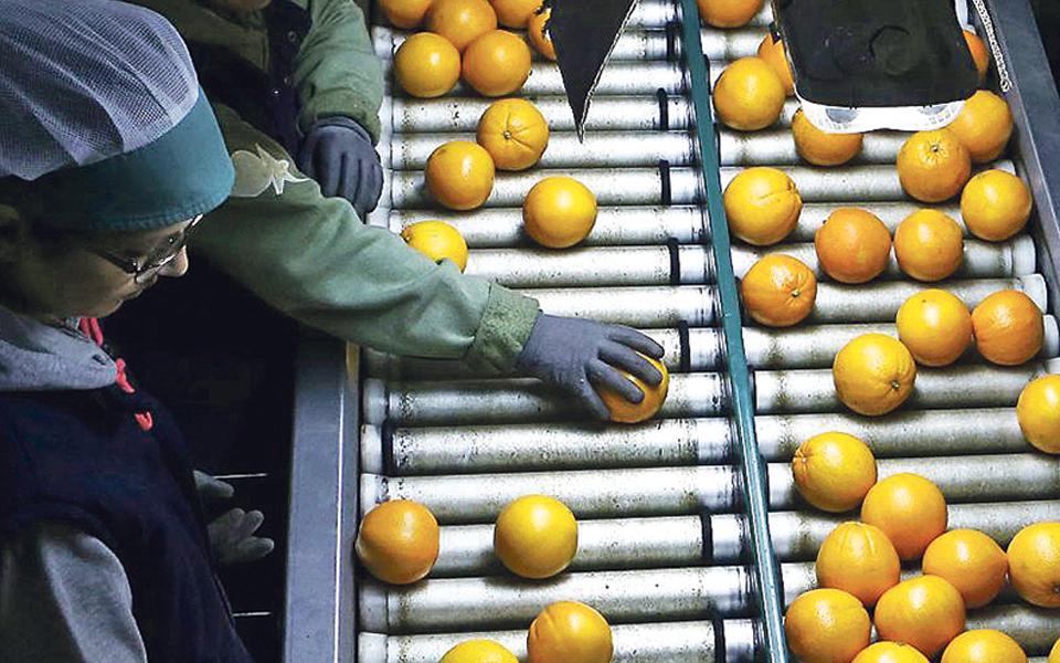 Mão de obra migrante é chave no agroalimentar