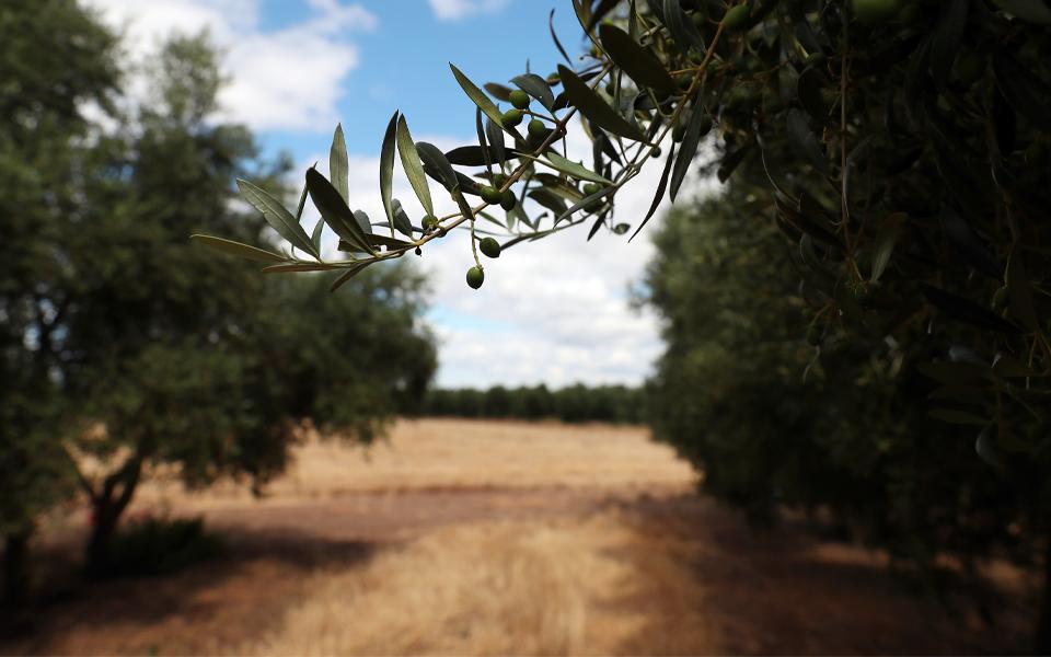 Agricultura contesta caminho  para metas do Pacto Ecológico
