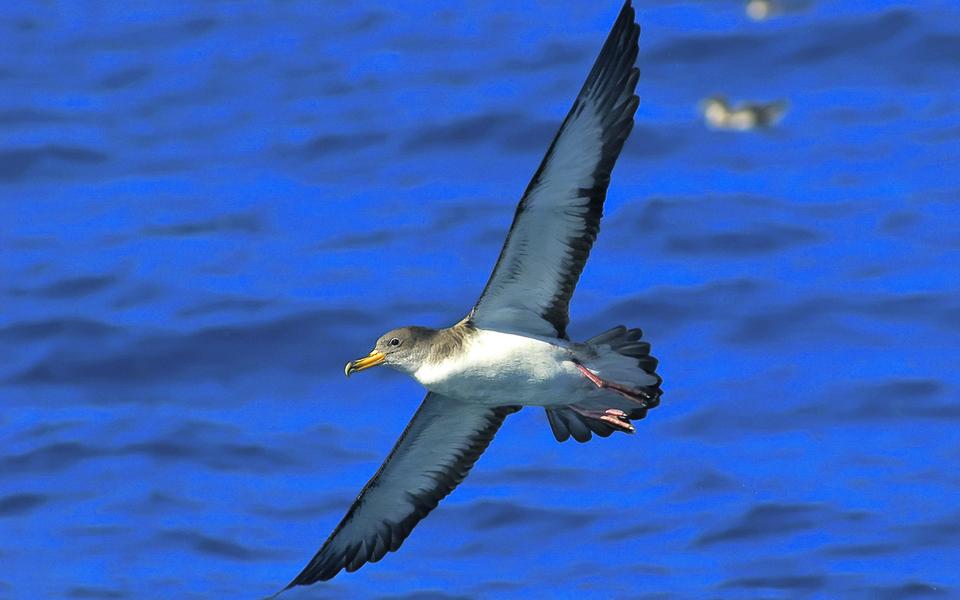 Atlas de Aves: uma cartografia detalha que ajuda biólogos e turistas