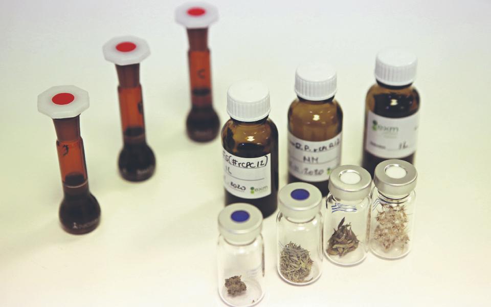 Canábis: Farmacêutica canadiana prepara unidade industrial em Setúbal