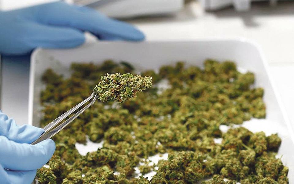 """""""Haverá duas substâncias  de canábis medicinal nas farmácias até ao final do ano"""""""