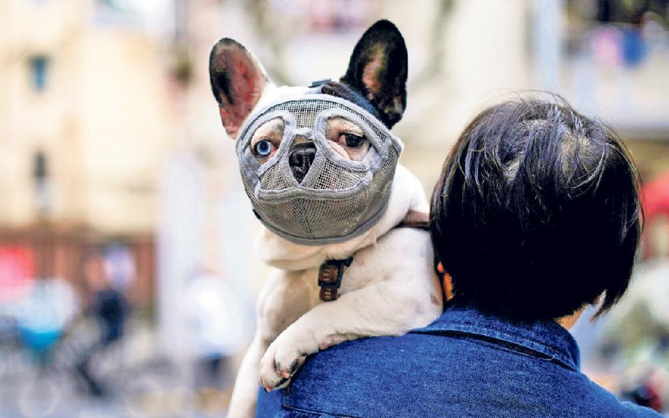 Petcare: O melhor do mercado para  o melhor amigo  dos humanos