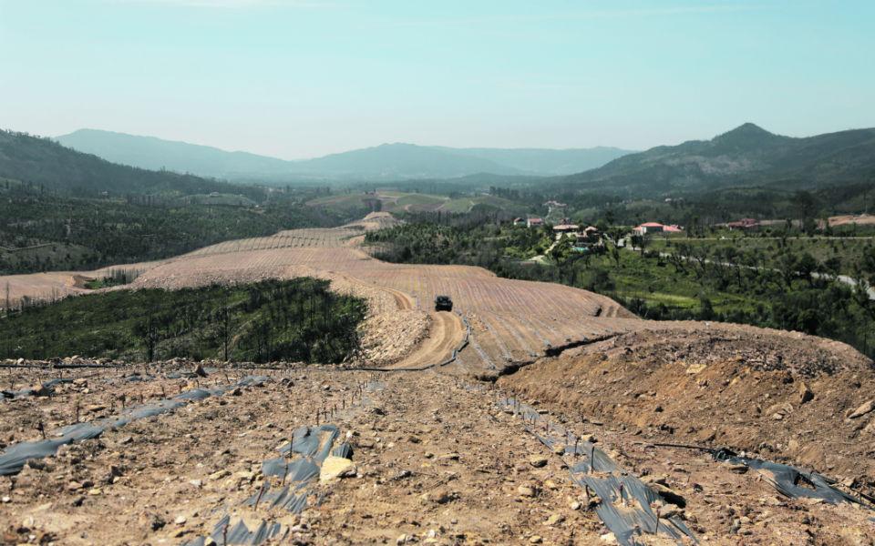 Quinta da Aveleda: Projeto inovador planta vinhas e árvores contra os fogos