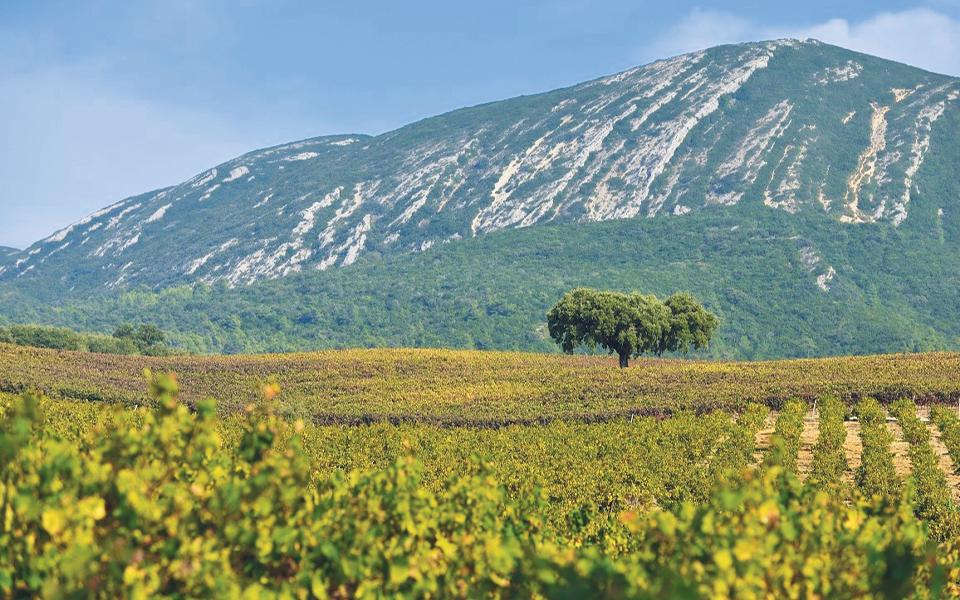 Região de Setúbal  já exporta 40%  da produção de vinhos