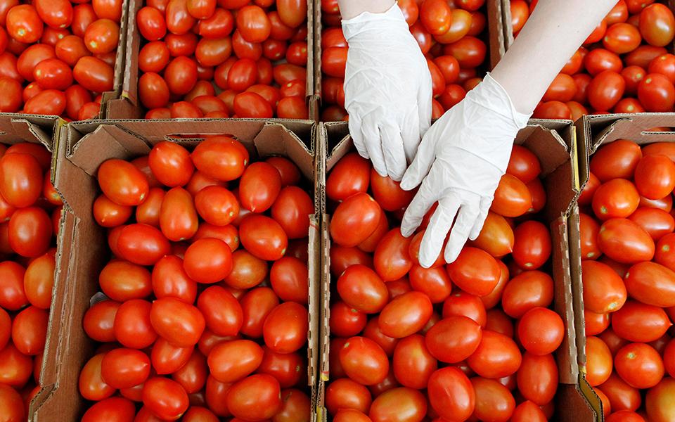 Abastecimento  de produtos agrícolas quase imune à crise