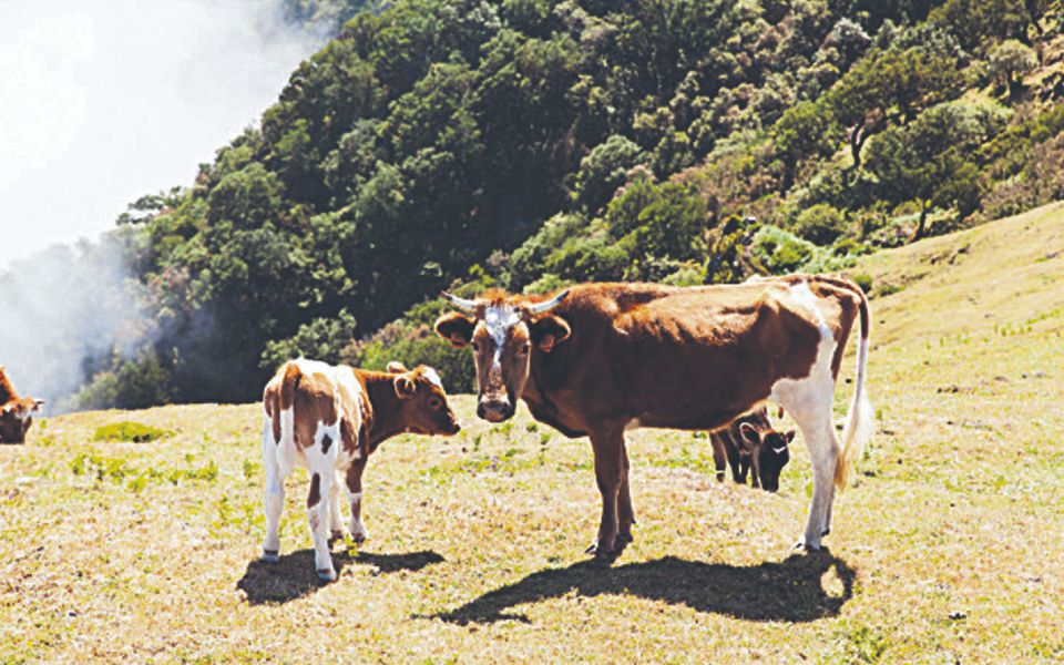 Madeira aplica 20 milhões de euros  no apoio a produções locais