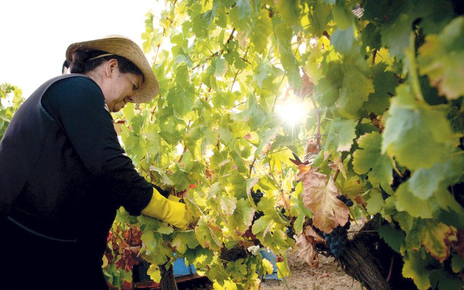 Vindimas: vinho já atrai 10% dos turistas em Portugal