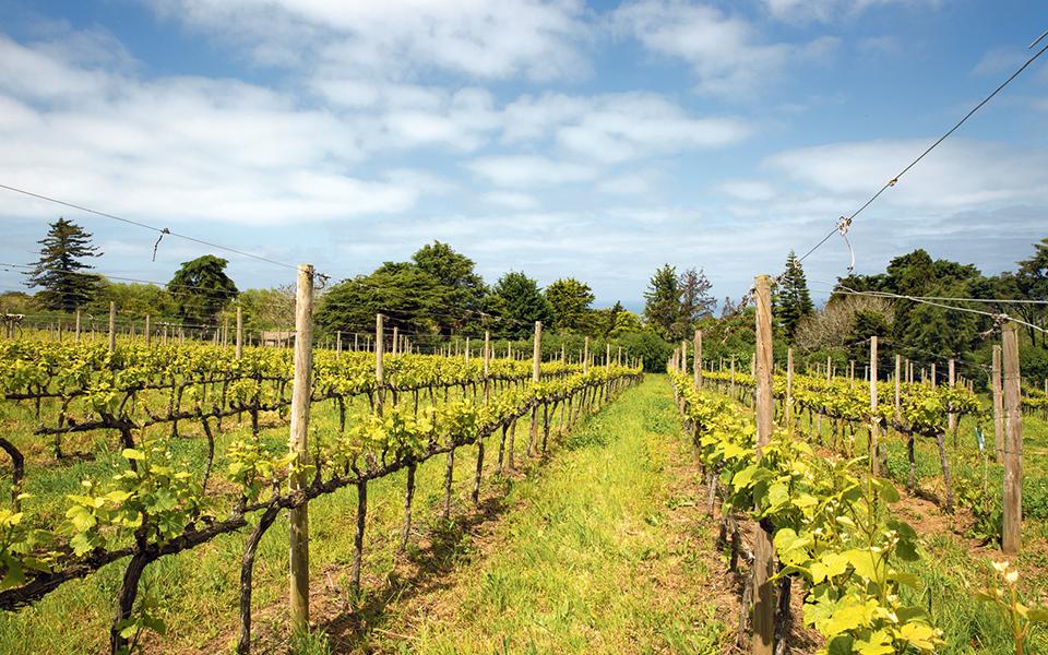 Casal Santa Maria: Os barões que trocaram a alta finança na Suíça pelas vinhas de Colares